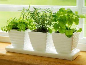 iStock-4787386_herbs-on-kitchen-windowsill_s4x3.jpg.rend.hgtvcom.616.462[1]